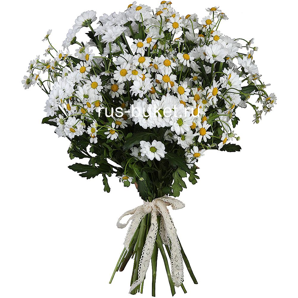 Купить цветы ромашки в саратове доставка цветов стрелиция москва