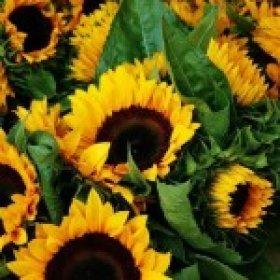 Цветы, которые нравятся всем